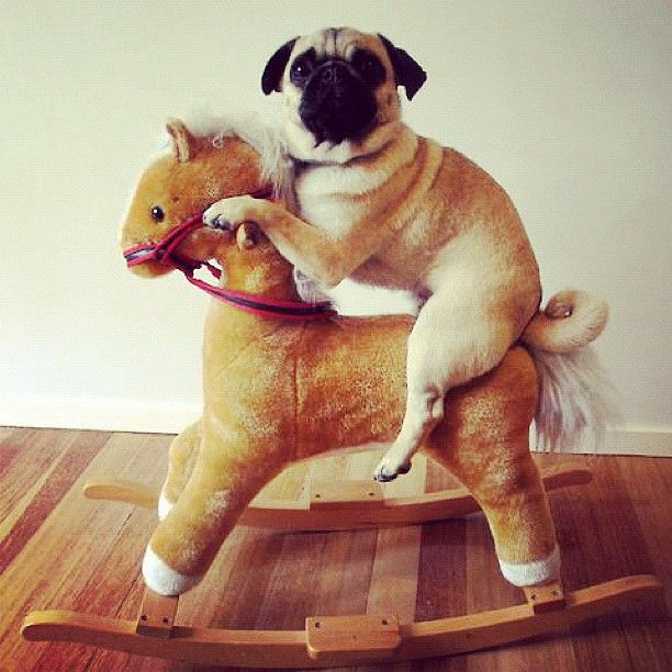 0c89e4ee35b32a0121e22a8e6a8c83b2-pug-horse-riding