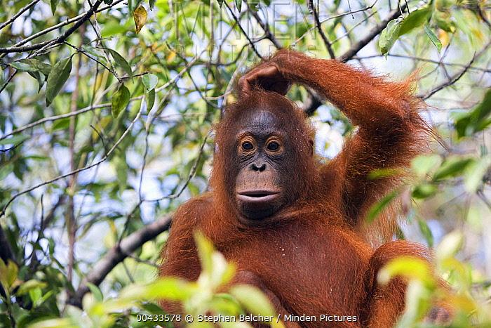 baffled monkey